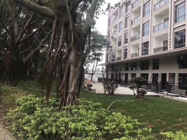 【深圳觀瀾小產權房】小產權和集體產權
